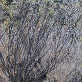 Mossy Oak Waterproof Camo Fabric - 60in x 2yds