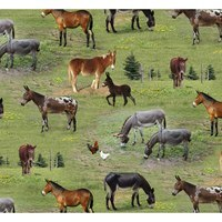 Elizabeth's Studio, Farm Animals Fabric - Donkeys