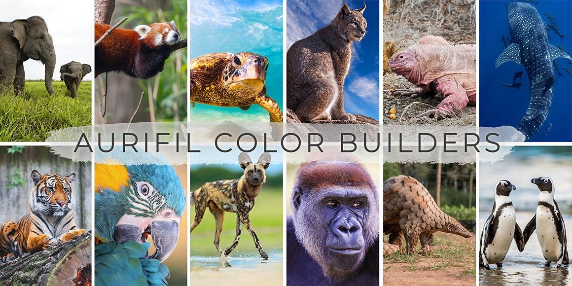 Color Builder